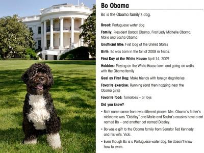 bo-obama-3-660