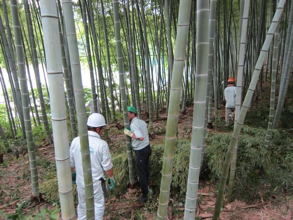 牧野ヶ池緑地 竹林整備で散策道1