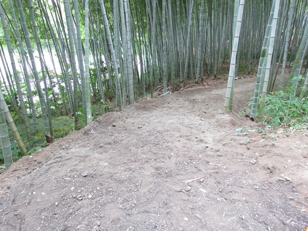 牧野ヶ池緑地 竹林整備で散策道3