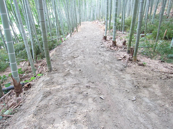 牧野ヶ池緑地 竹林整備で散策道4
