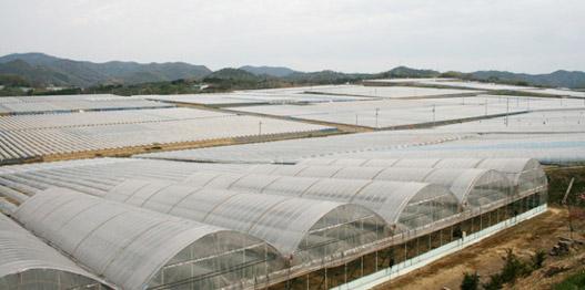 沼隈・八日谷樹園地のぶどう畑