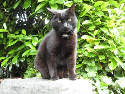 フィレンツェ・ミケランジェロ広場の黒猫