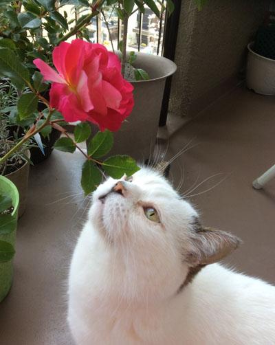 Unoと薔薇