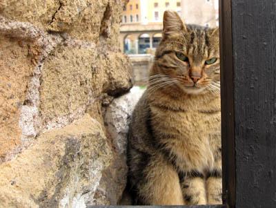 ローマ・トッレ アルジェンティーナの猫たち