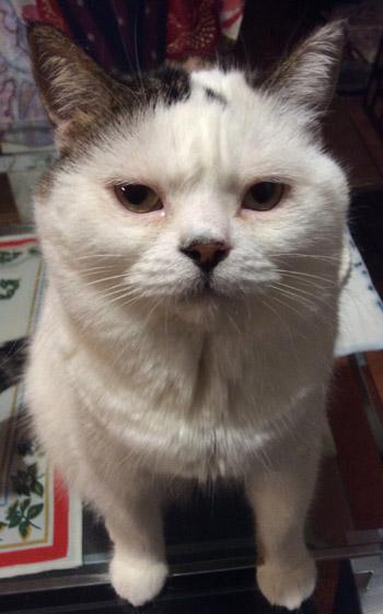 我が家の猫Uno