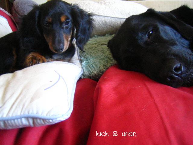 キックとウラン