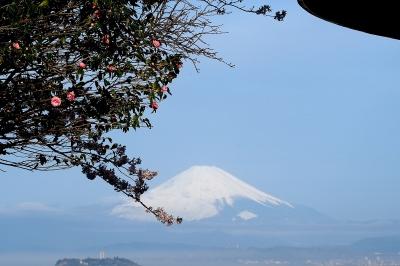 富士と桜・椿
