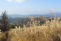湧藍山 景色