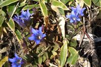 湧藍山 花