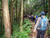 可愛岳 下山途中の杉林