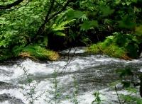 ハルニレ湯川