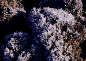 焼け石に霜