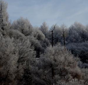 針のような霜の朝1