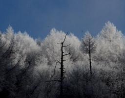 17.1.樹霜1
