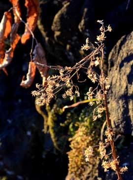 枯れ草と朝日