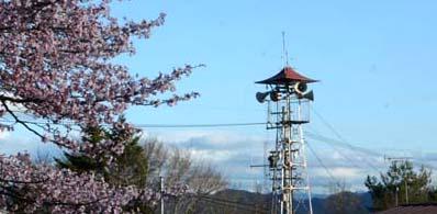 火の見櫓と桜