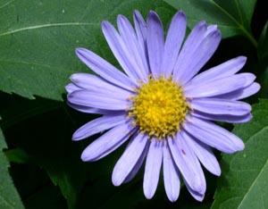 野菊の季節