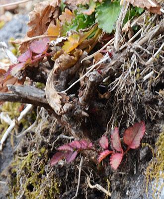 石積みの植物