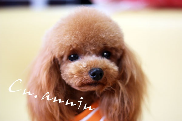 family_dog.jpg