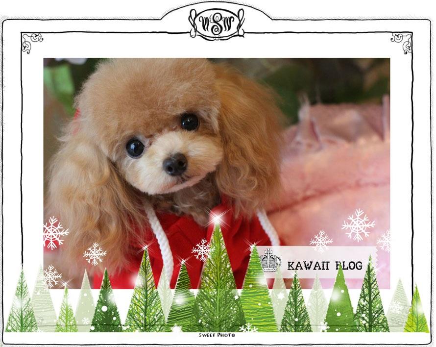 KAWAIIブログ