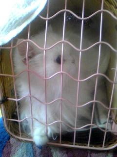 cat-in-cage