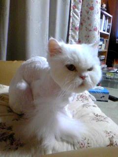nude cat