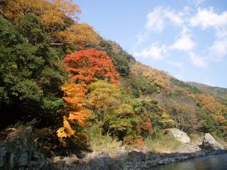京都 保津峡の紅葉は綺麗です。