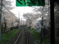 桜のトンネル4