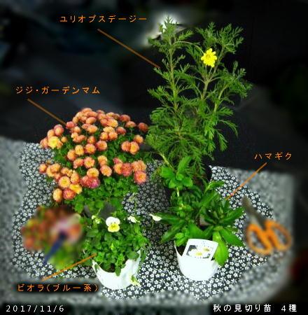 2017/11/10、秋の見切り苗4種ゲット その1