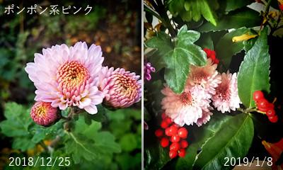 2018/12/25-2019/1/8、ポンポン系ピンク