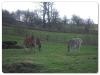 Eland & Chapmans Zebra