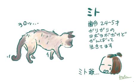 おじいちゃん猫