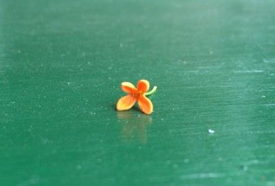キンモクセイ花びら