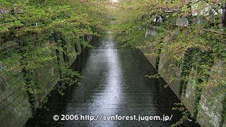 060414_中目桜