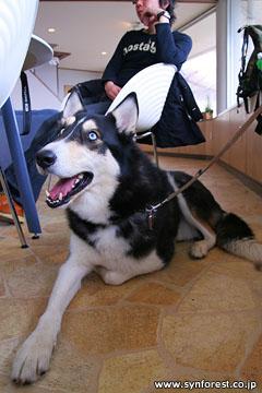 ドッグカフェ「Heart2 dog」にて