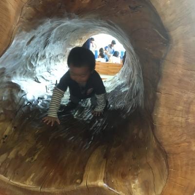 木のトンネルくぐり