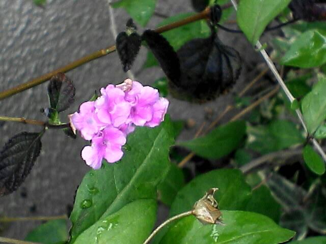 080110-04 小さな花のアップ