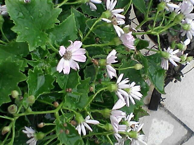 080110-08 白い花