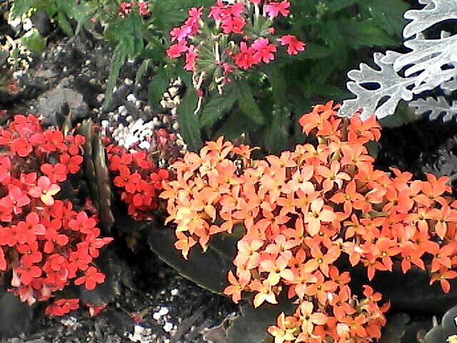 070507-02 プランターのカラフルな小花