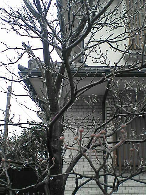 080120-10 その木の様子