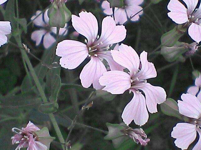 080609-10 謎の花