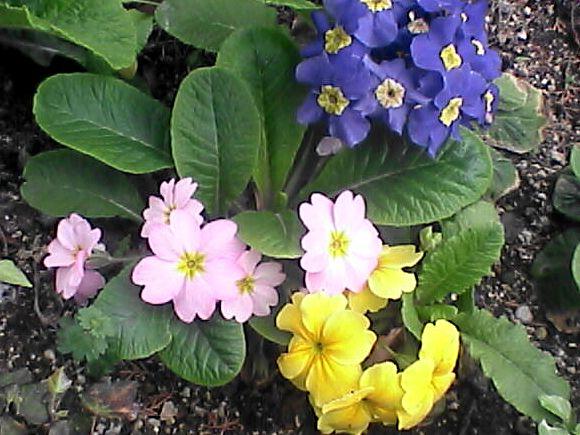 花壇の花・色々