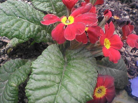 花壇の花・赤い花と葉