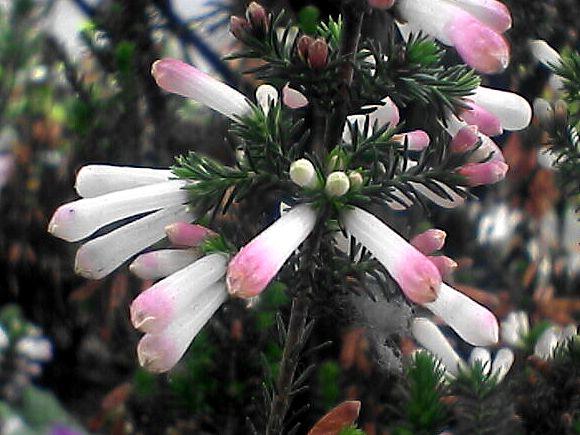 筒状の花のアップ