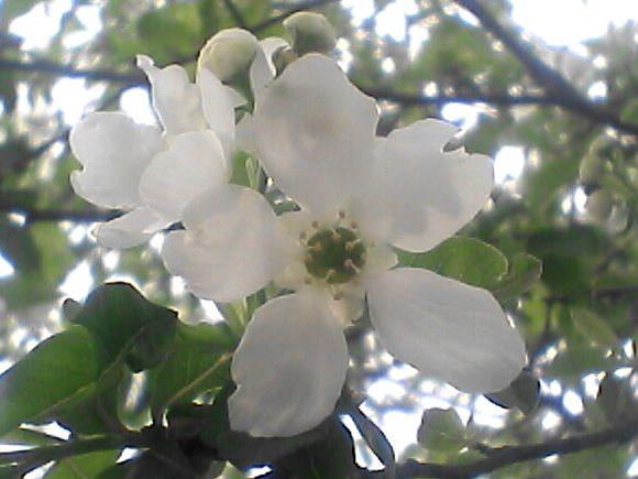 木に咲く白い花のアップ