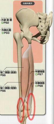 膝の裏の突っ張りの原因