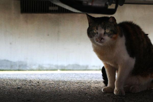 Cat20060830