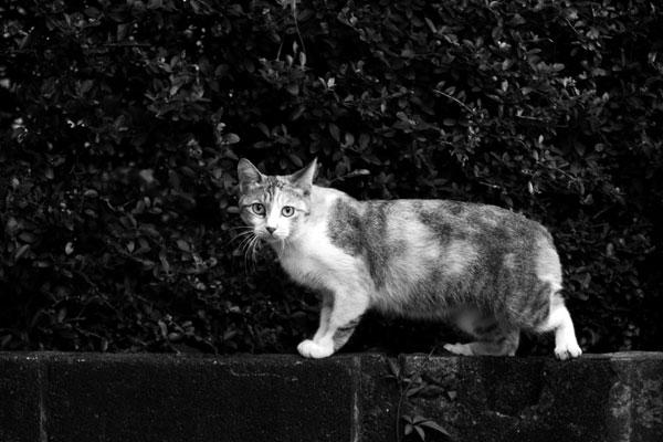 Cat20060902