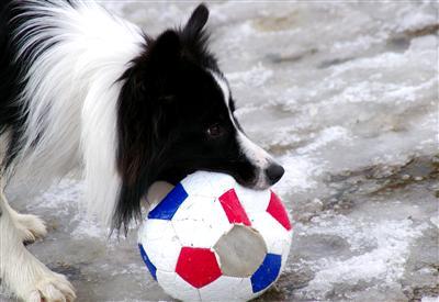 サッカーボールを蹴るほうが、ワタシ達としては楽なんです