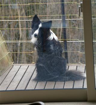 見返り美犬?!